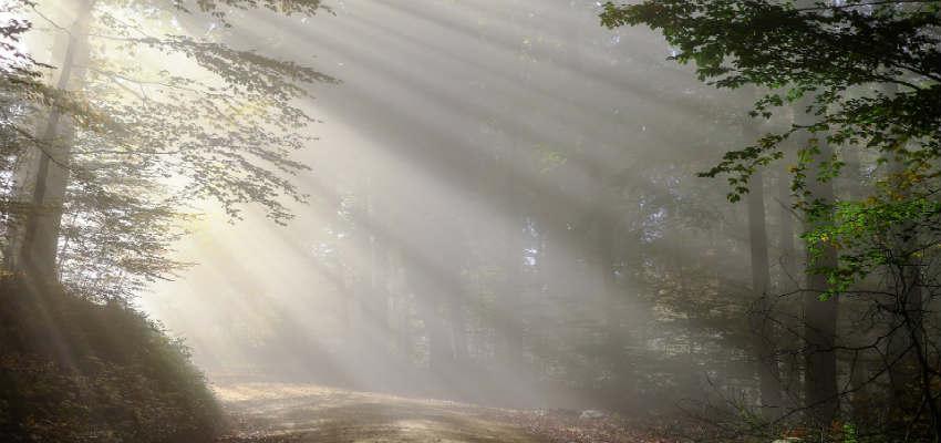 begynd at løbe i skoven på jævnlig basis