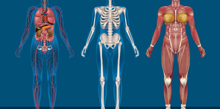 Bækkensmerter – Hvad og hvordan behandling af bækkenløsning?