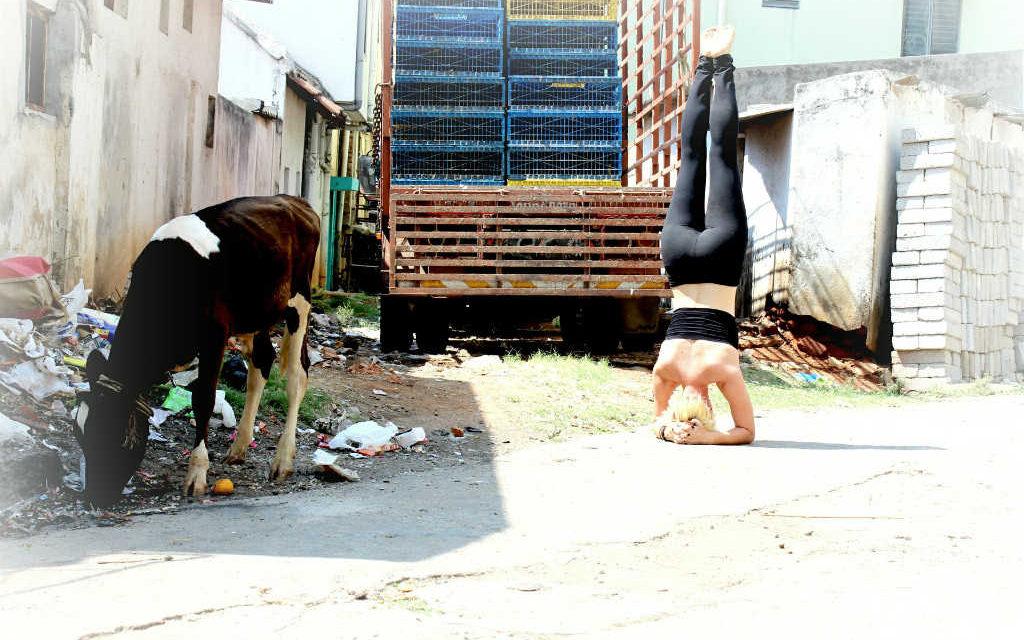 Hvad er Ashtanga yoga? Få det korte svar i oversigten her