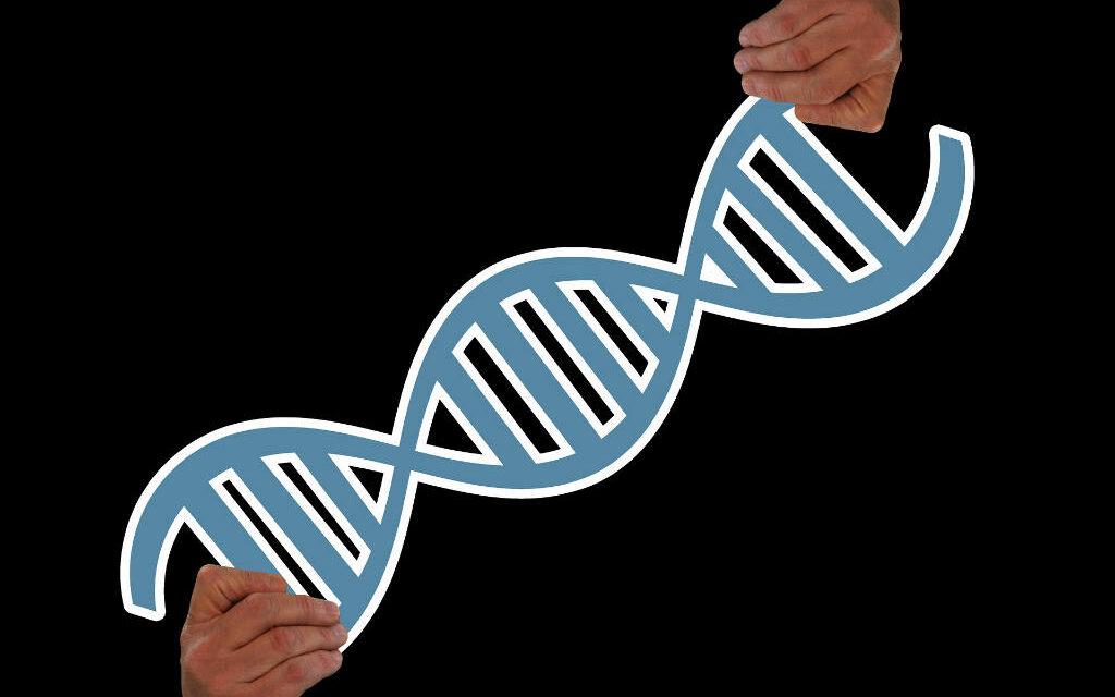 Hvad er aminosyrer?